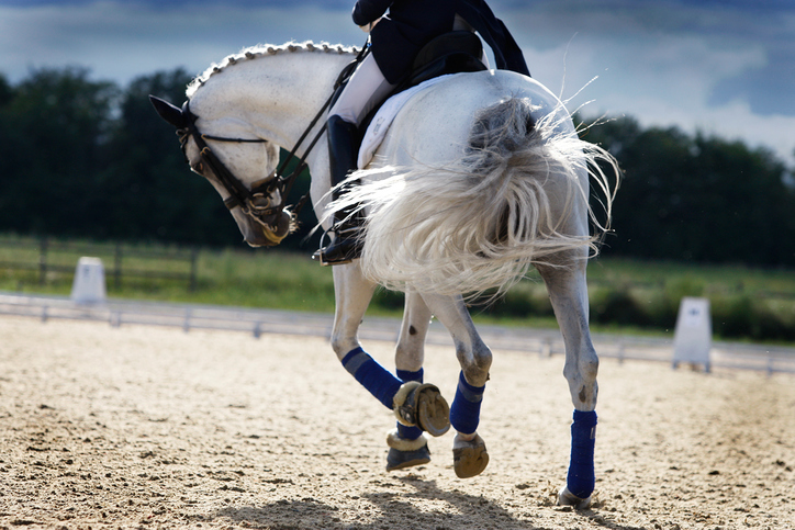 Ponit ovat suuria persoonia pienessä koossa